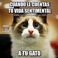 Cuando le cuentas tu vida sentimental a tu gato