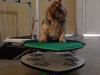 diversão para cães em exercícios