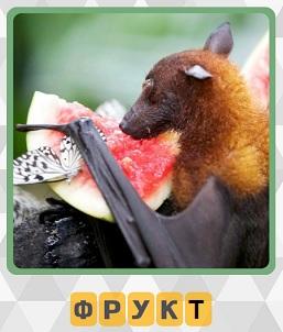 600 слов летучая мышь хочет съесть фрукт 10 уровень