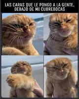 barbijo humor gato