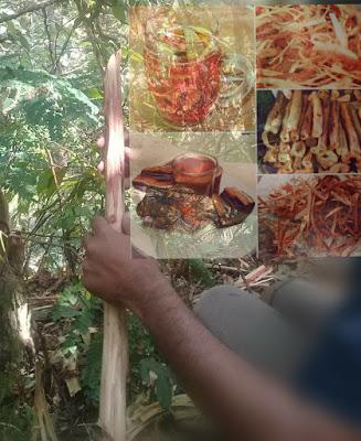 Mamfaat kayu secang untuk kesehatan