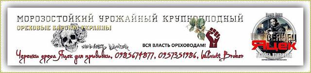 Черенки ореха Яцек для прививки, 0985674877, 0957351986, Walnuts Broker