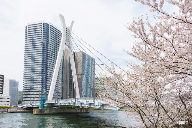 桜の花と中央大橋