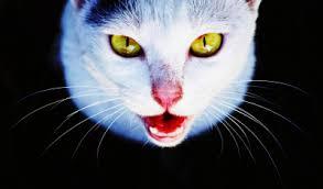القطط تأكل لحوم البشر