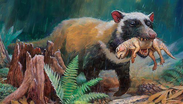 أحد الثدييات يصطاد صغير ديناصور
