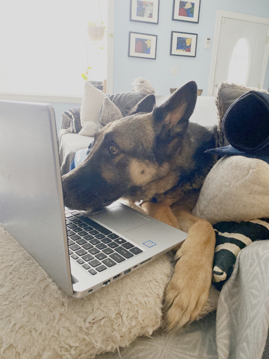 Finn on couch looking at laptop