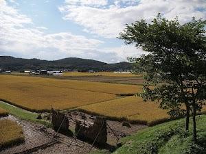 Mengintip Pertanian di Jepang