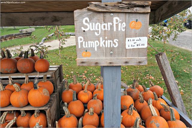 Calabazas en la Granja  Red Apple Farm