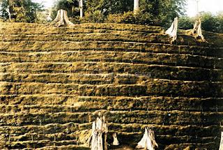 ladang perusahaan kebun teh di pematangsiantar