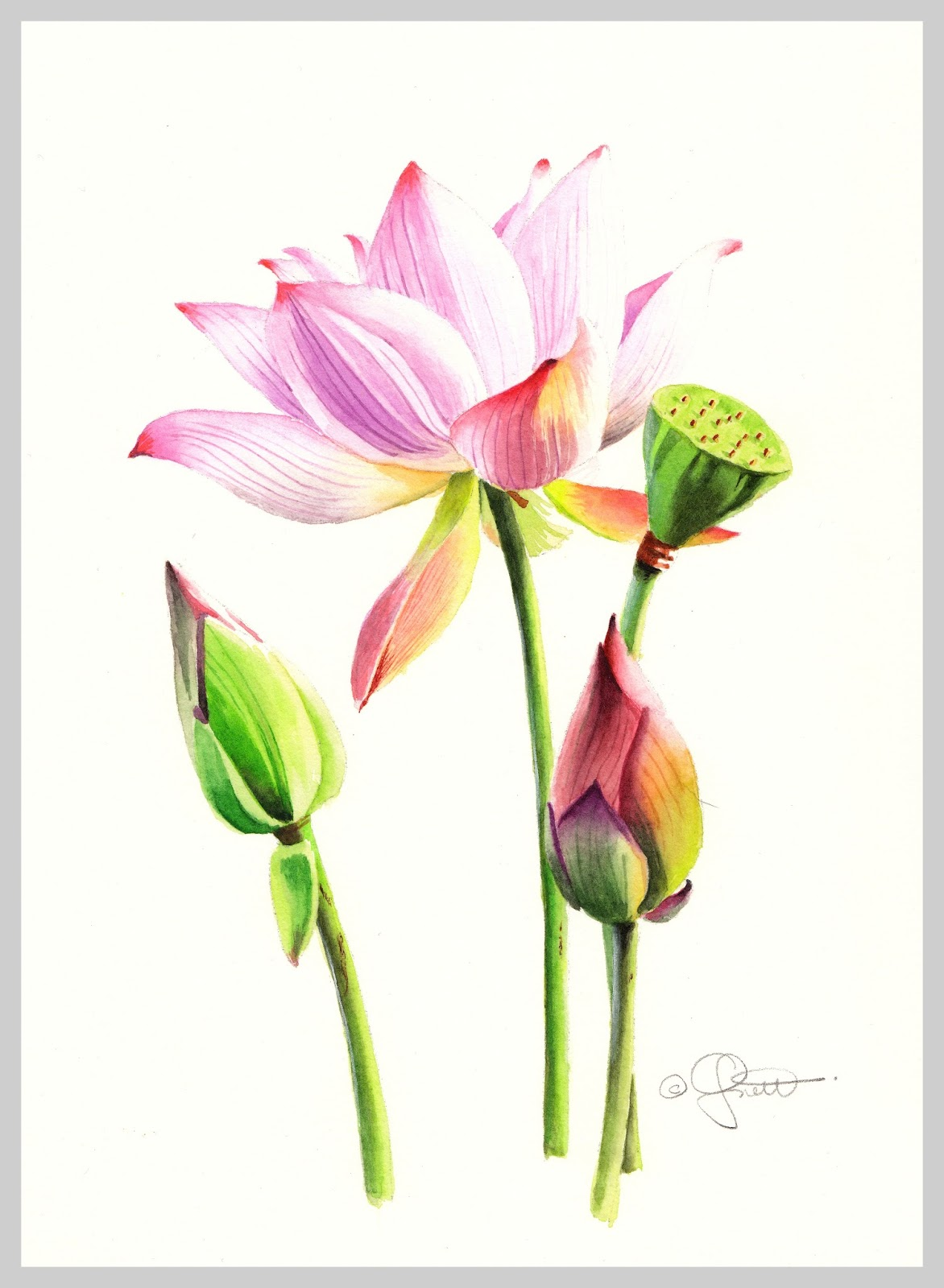 Contemporary Realism Lotus Blossom New Watercolor New