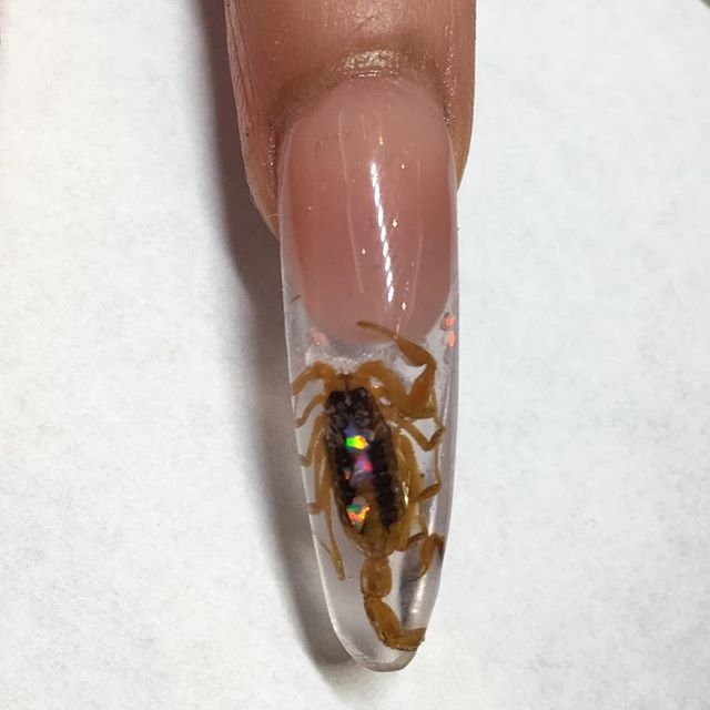 Trendz8 nail art trend you need to try encapsulated nails there are a lot many ideas done with encapsulation few are shown here for you guys prinsesfo Gallery