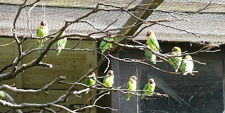 Photo of a group of green birds perched together on branches in the sunshine