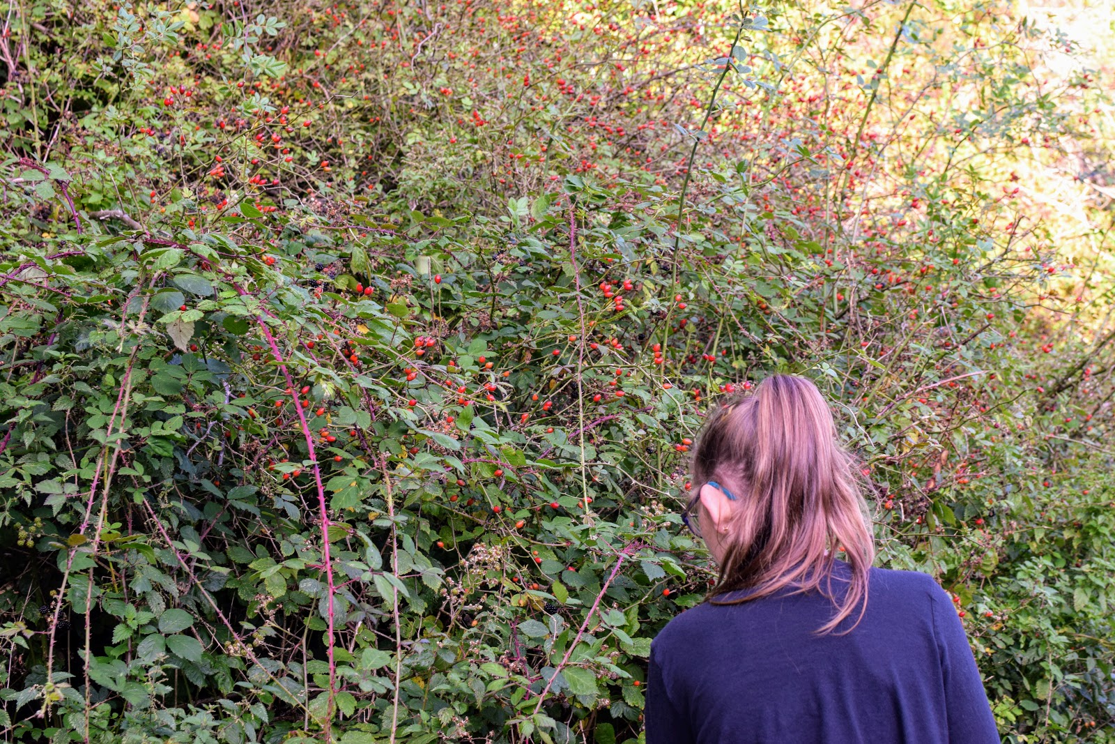 , Blackberry Picking and Making Crumble:  An Autumn Walk