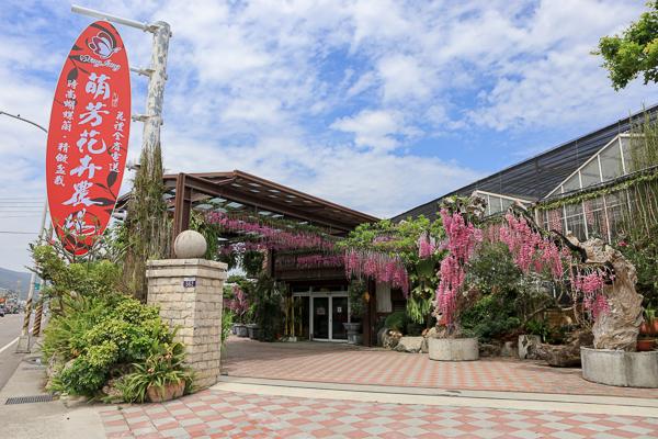台中后里萌芳花卉農場上萬株石斛蘭瀑布和蝴蝶蘭花海,免費參觀