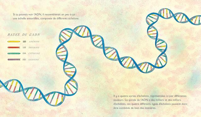 Grandir Les secrets de notre ADN