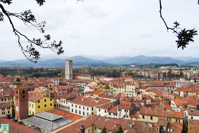 Vistas desde la Torre Guinigi en Lucca, Toscana