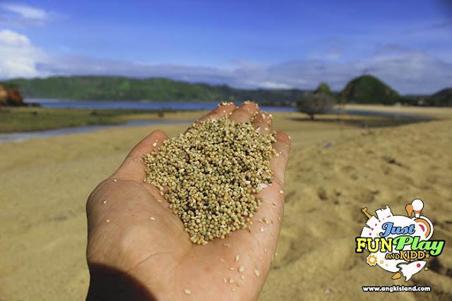 pasir merica