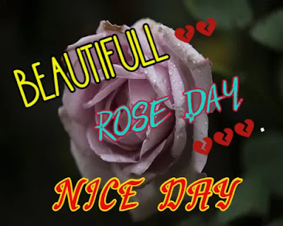 Happy Rose Day Wishes + Rose Day Images Download