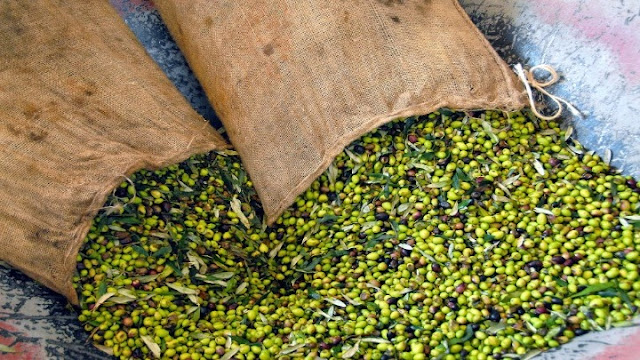 Χιλιάδες κατ' επάγγελμα αγρότες εκτός αποζημιώσεων λόγω υπαιτιότητας του ΟΠΕΚΕΠΕ!