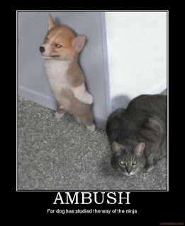 Hilarious Dog Pictures : Ambush