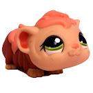 Littlest Pet Shop Large Playset Guinea Pig (#1638) Pet