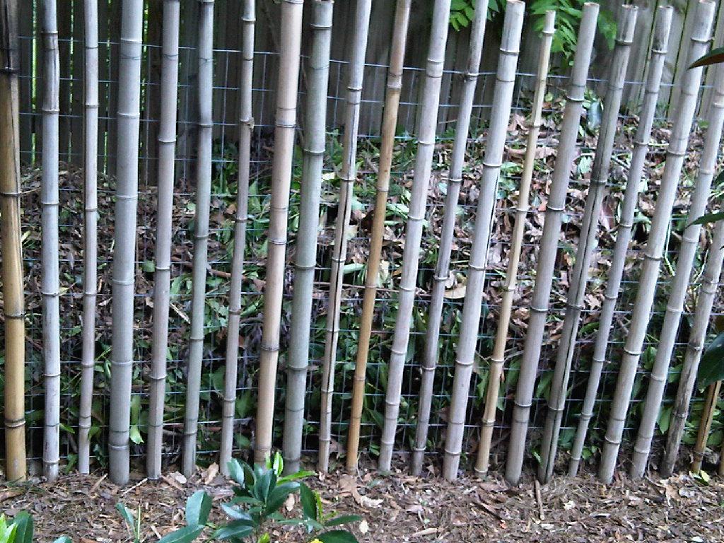 Bamboo Grove Photo Bamboo Garden Fencing