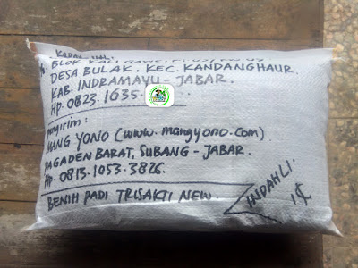 Benih padi yang dibeli    CASIM Indramayu, Jabar. (Setelah packing karung ).