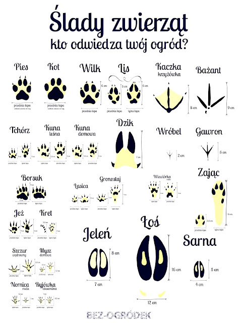 ślady i tropy zwierząt