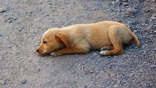 Ιωάννινα:Περισσότερα από 10 σκυλιά φολιάστηκαν στη Βουνοπλαγιά