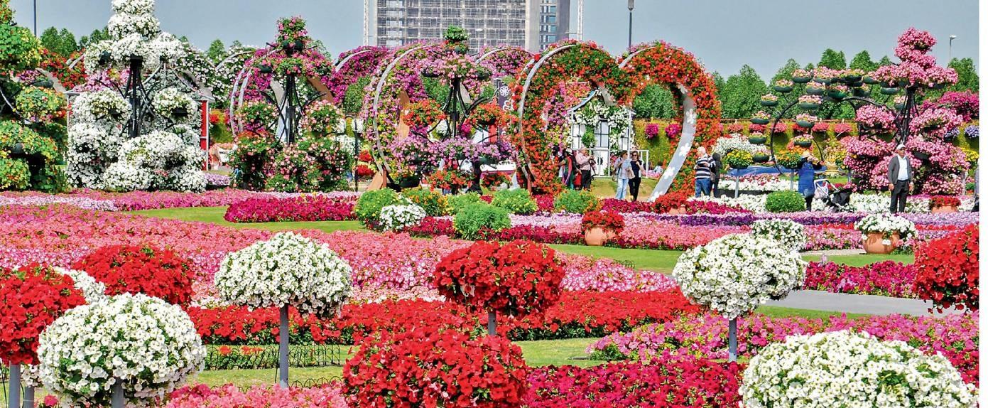 Miracle Garden Worlds Biggest Flower