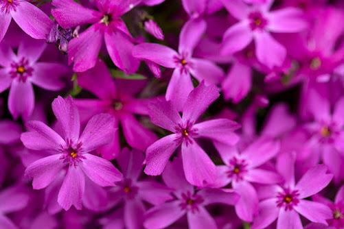 صور زهور ورق حائط 13