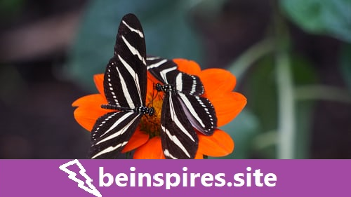 How To Be A Social Butterfly Using Social Media Syndication