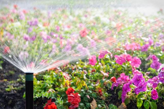 Summer Villa Garden Care Considerations and Tips