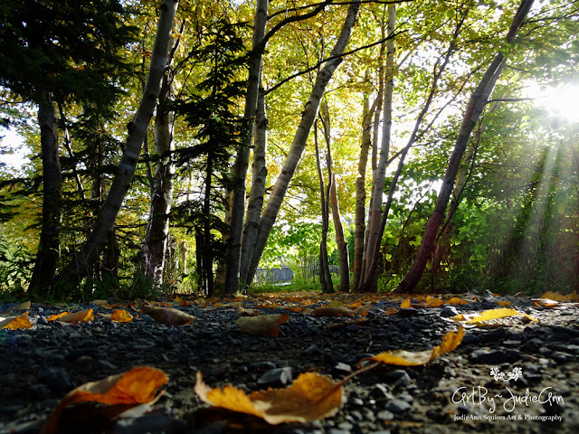 The Dawn Of Autumn