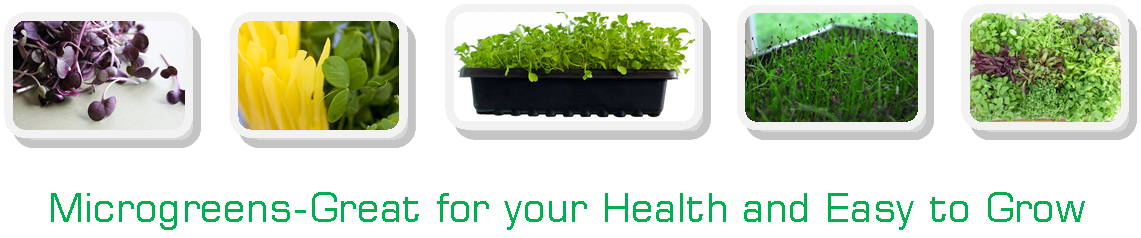 Microgreen product images