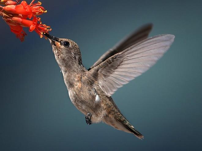 Beautiful And Dangerous Animals Birds Hd Wallpapers: Most Beautiful Birds Latest HD Wallpapers/Images 2013