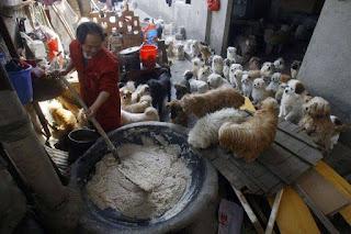 cães na china