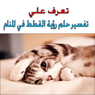 تفسير حلم رؤية القطط فى المنام