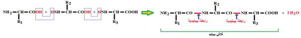 معادلة تشكيل الرابطة البيبتيدية