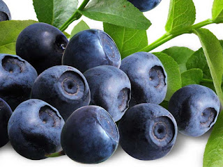 blueberry fruit images