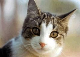 Cerita Kisah Wanita yang masuk neraka karena kucing