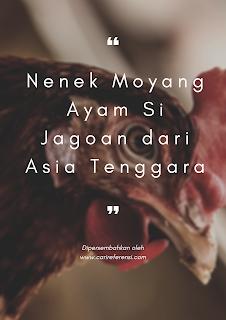 Si Ayam Jago Ternyata Nenek Moyang Ayam! Gagah dan Berbulu Cantik, Inilah Dia Si Ayam Hutan Merah