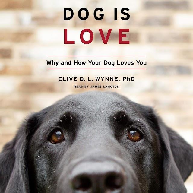 Ο Σκύλος Είναι Αγάπη: Γιατί και Πώς ο Σκύλος σας Σας Αγαπάει
