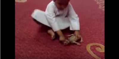 شاهد بالفيديو الطفل الذي تعدي علي الحرباءة وردة فعلها السريعة والتي اثارت الرعب وما هو ثمن التعدي علي الحيوان