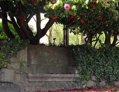 banco de granito junto de árvore de camélias