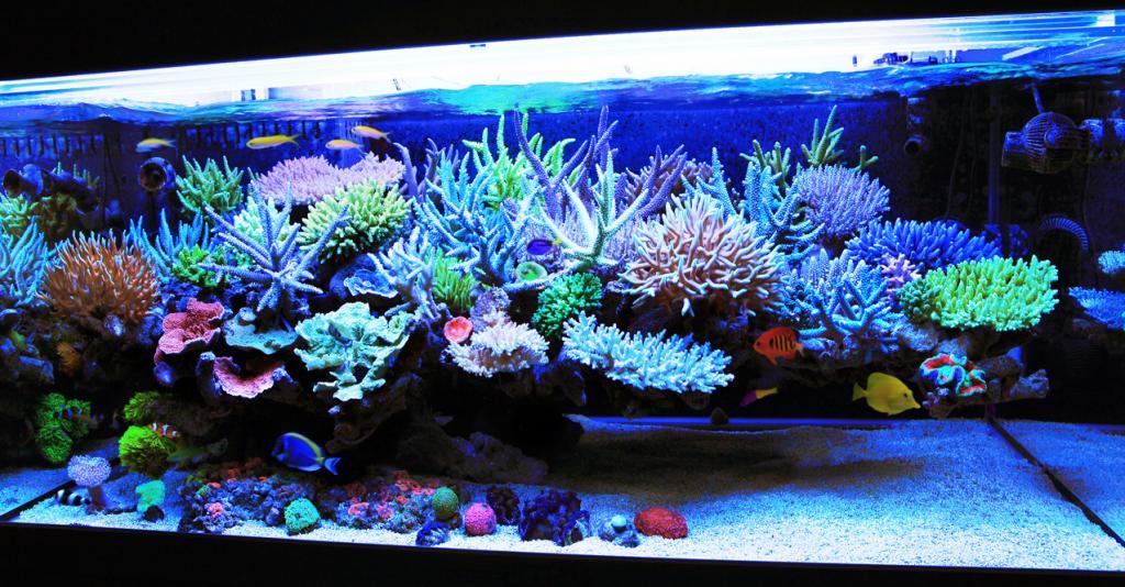different types of aquariums - Different Types of Aquarium ...