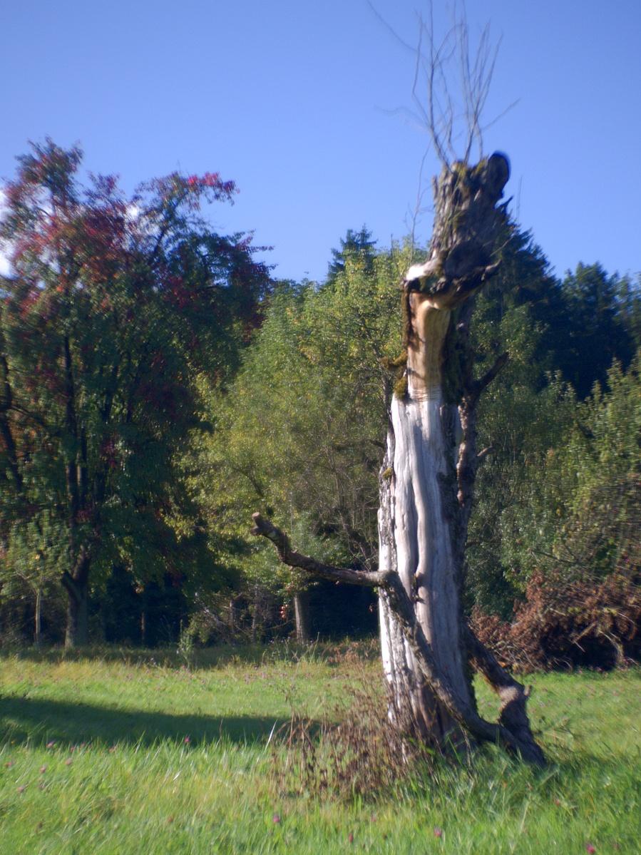 #286 SOM BERTHIOT PARIS CINOR f1.5 20mm – Ich war ein Birnbaum