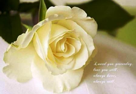 Pics Of Beautiful Flowers With Quotes