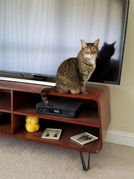 image of Sophie the Torbie Cat, sitting on the TV stand, looking at me