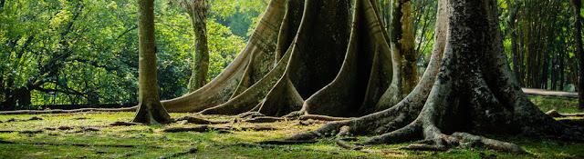 http://www.wisatakalimantan.com/2016/07/10-objek-wisata-di-kabupaten-sambas-yang-mempesona.html